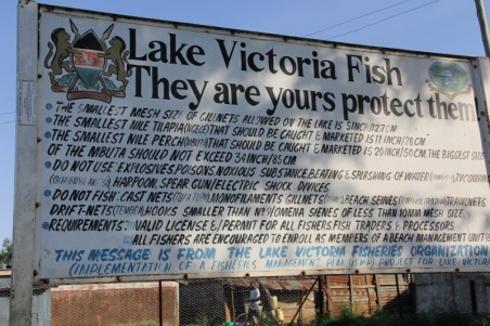 Lake Victoria Fisheries Organization works in beach communities like Usenge to help raise awareness about the importance of protecting and conserving the fish. The Kenyan government frequently implements four-month-long Dagaa fishing bans.